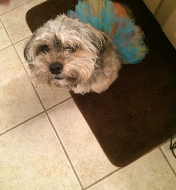 Lizzy-Lou-is-Missing-Have-You-seen-My-Dog-Oohlalablog-11
